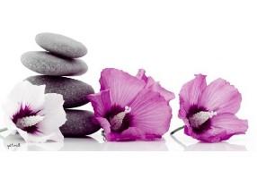 Institut de beauté Fleur d'Althea Nailly